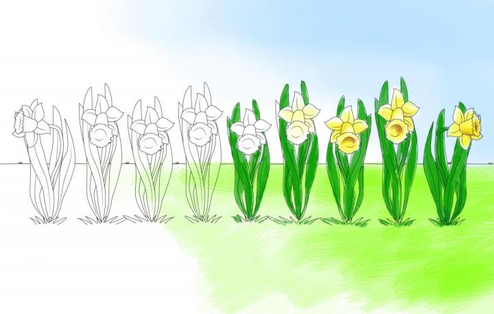 Blumen-Malvorlagen Blumenbeet