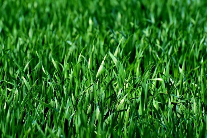 Den Rasen richtig pflegen - Das muss beachtet werden