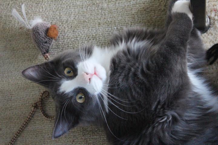 Katzenspielzeug basteln - 5 kreative Ideen