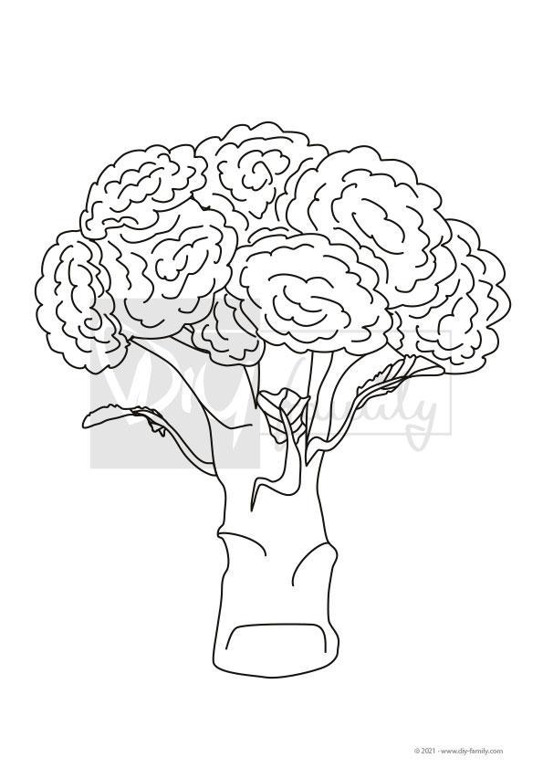Broccoli – Einzelausmalvorlage