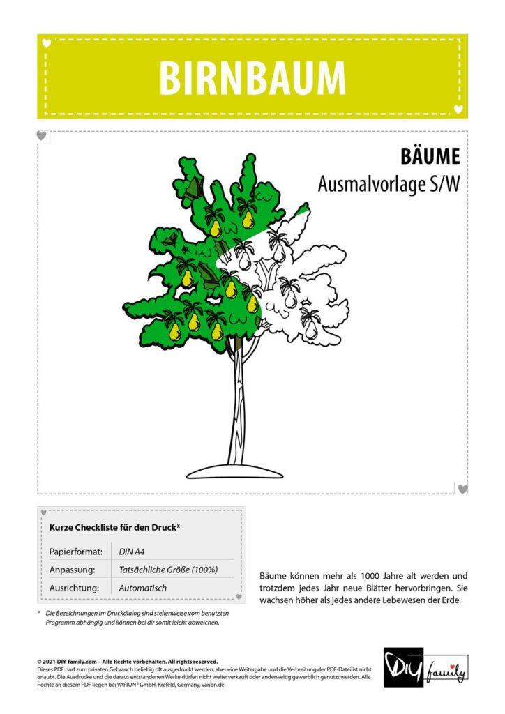 Birnbaum – Einzelausmalvorlage
