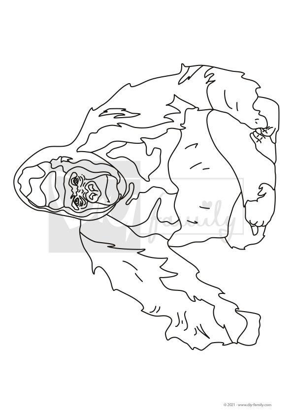 Gorilla – Einzelausmalvorlagen