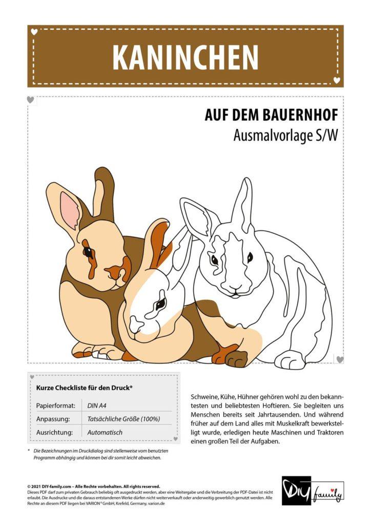 Kaninchen – Einzelausmalvorlage