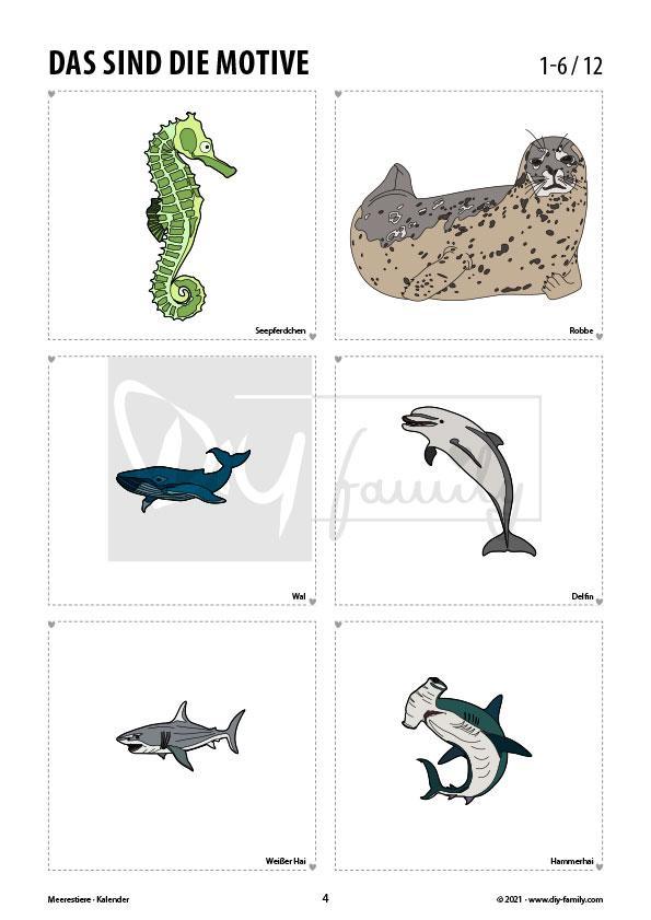Meerestiere – Kalender 2021