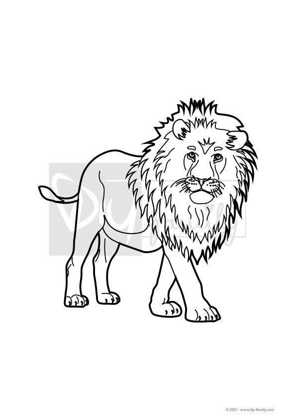 Löwe – Einzelausmalvorlagen