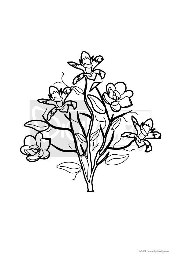 Magnolie – Einzelausmalvorlage