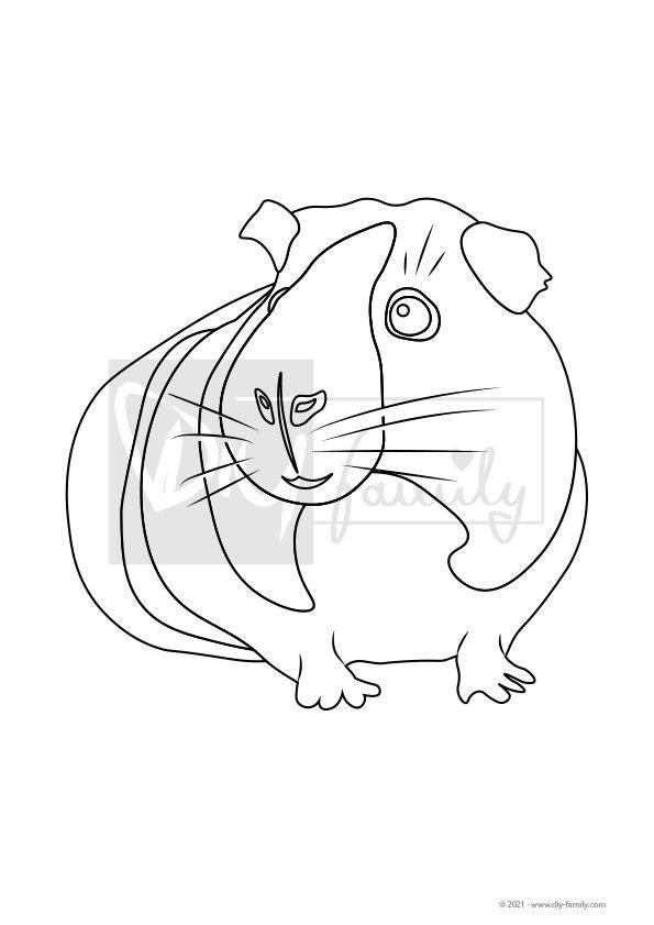 Meerschweinchen – Einzelausmalvorlage