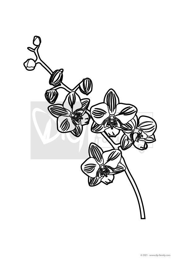 Orchidee – Einzelausmalvorlage
