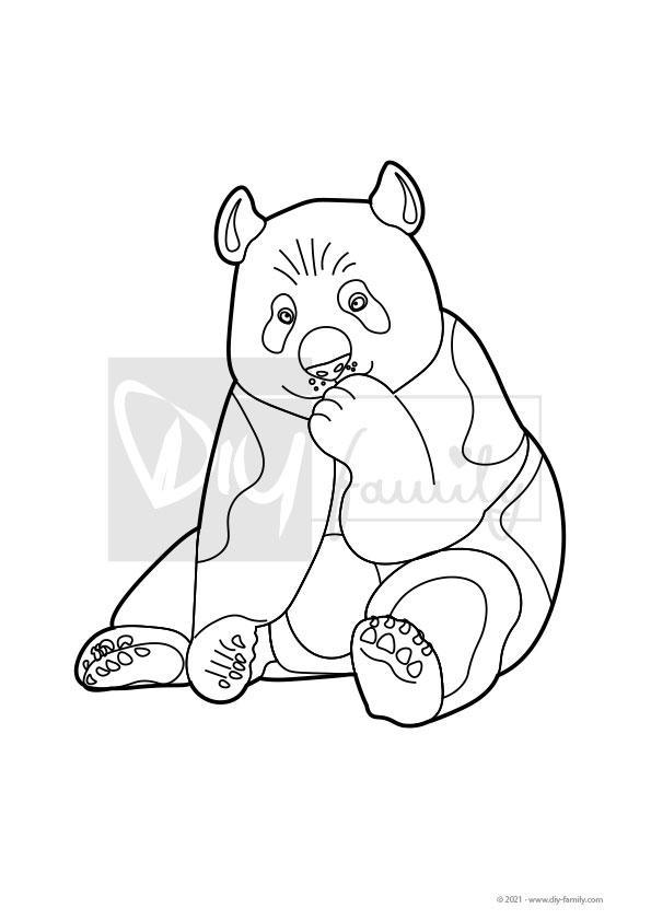Panda – Einzelausmalvorlagen