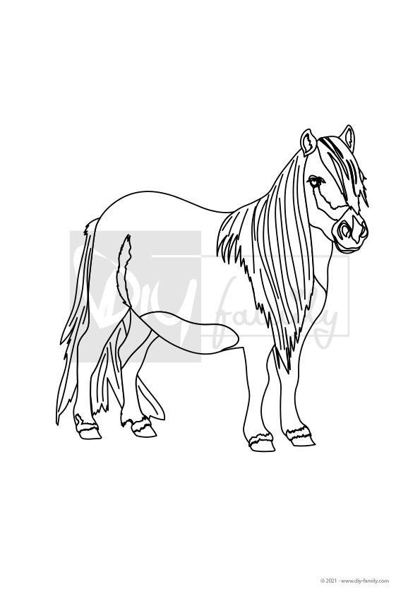 Pony – Einzelausmalvorlage