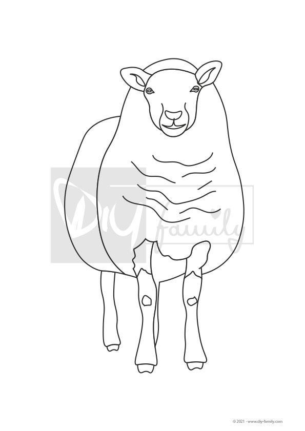 Schaf – Einzelausmalvorlage