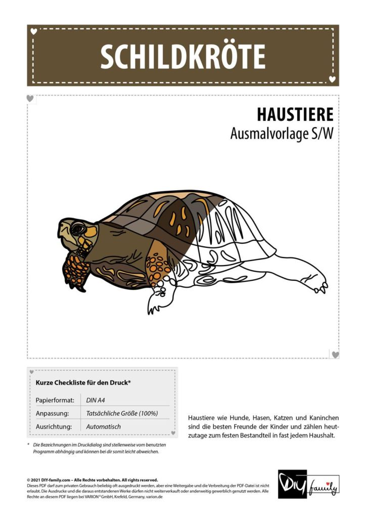 Schildkröte – Einzelausmalvorlage