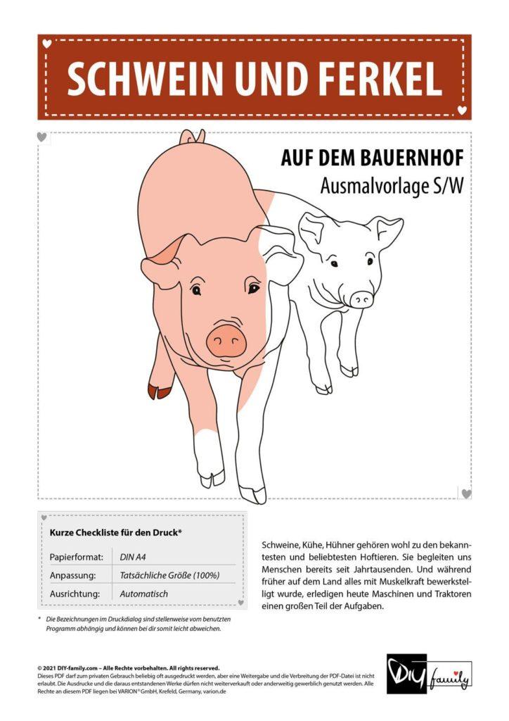 Schweine – Einzelausmalvorlage