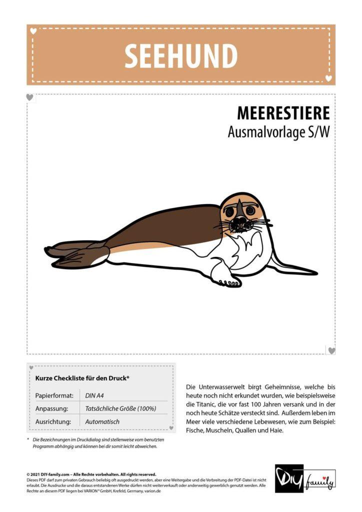 Seehund – Einzelausmalvorlage