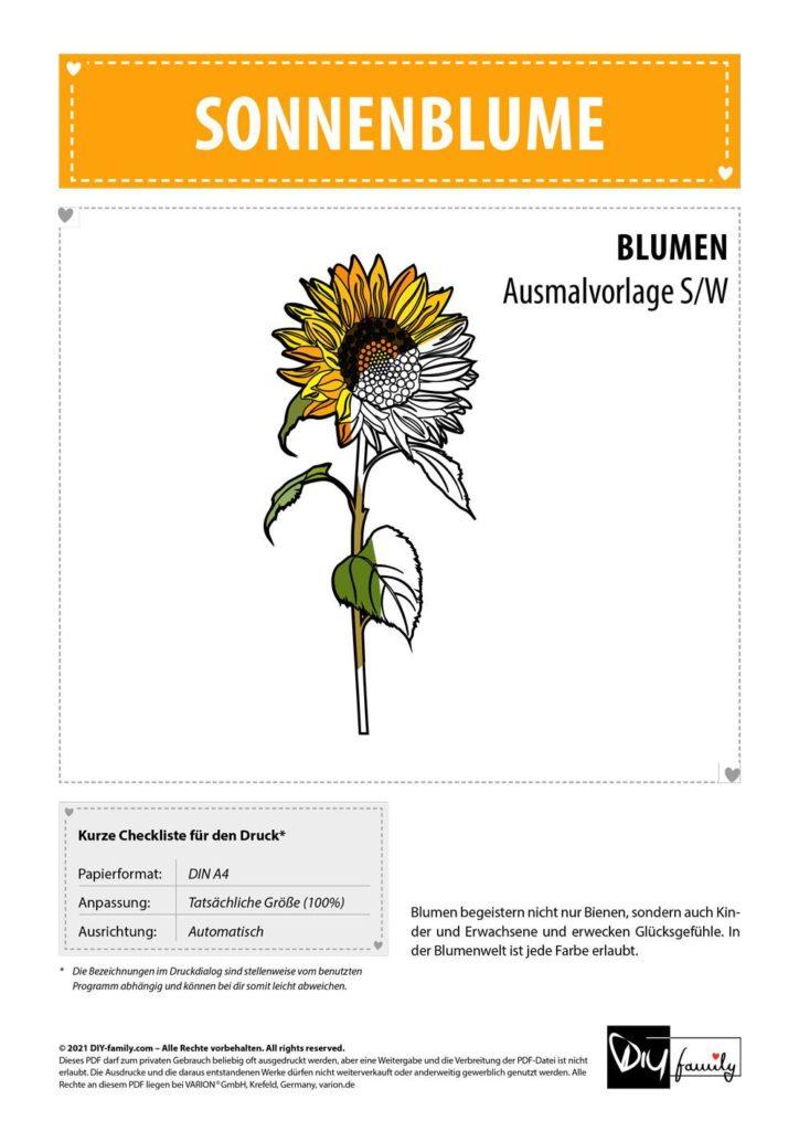 Sonnenblume – Einzelausmalvorlage