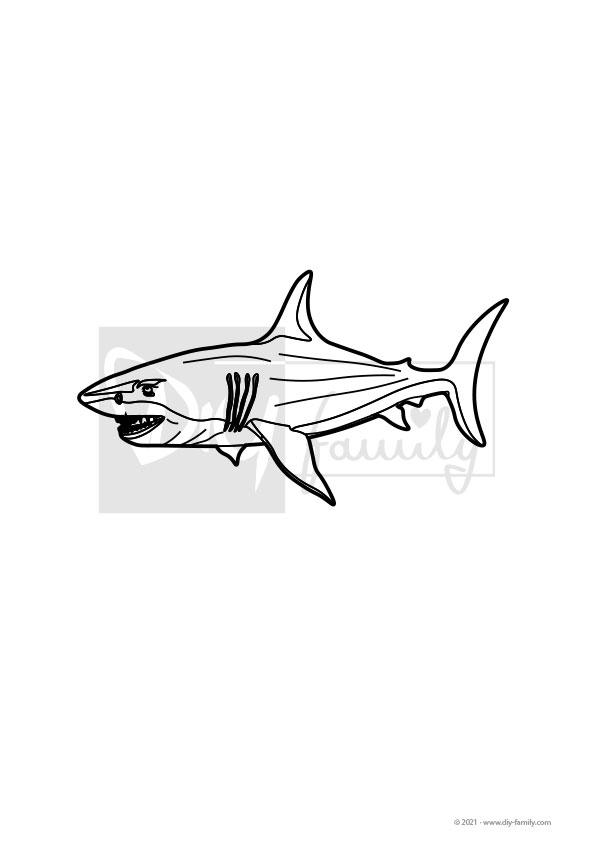 Weisser Hai – Einzelausmalvorlage