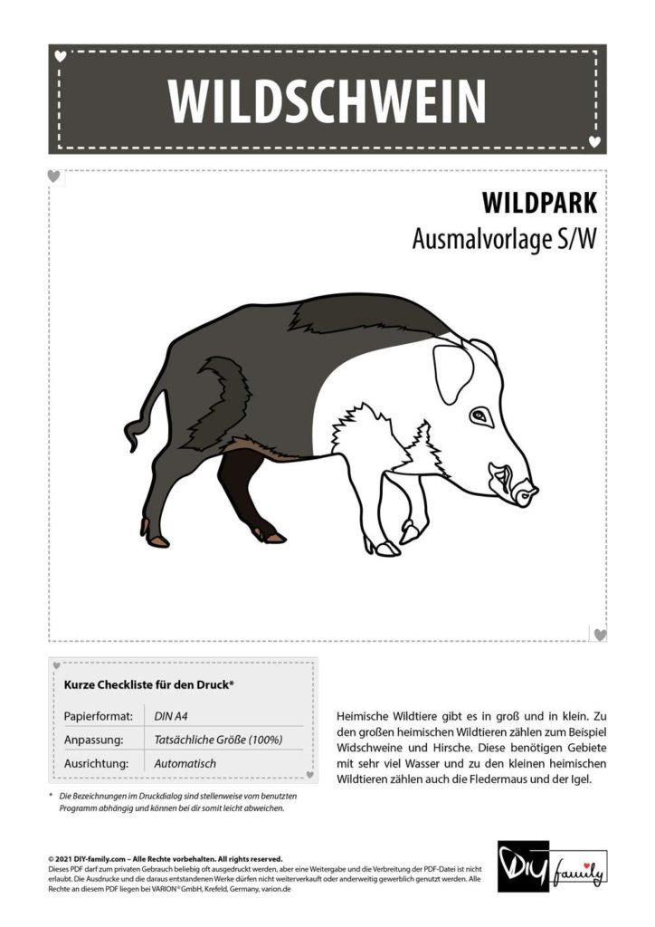 Wildschwein – Einzelausmalvorlage