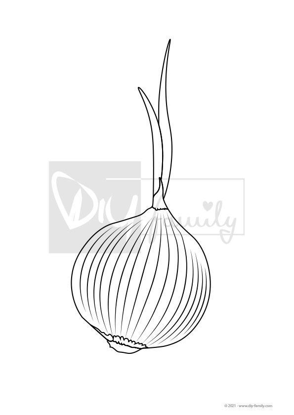 Zwiebel – Einzelausmalvorlage